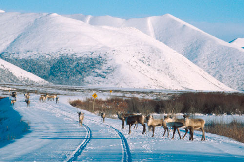 Many travel the Dempster Highway to experience unparalleled scenery and wildlife viewing opportunities.