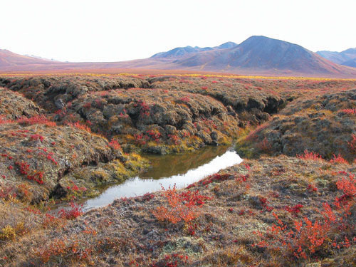 Frost Mounds/Palsas – peaty, ice-cored mounds a few metres high. These are typically found in areas of discontinuous permafrost, and form and melt each year.