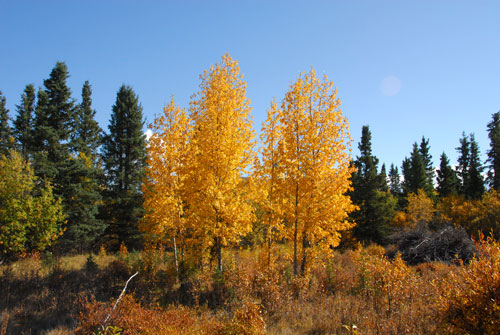 The best of autumn on the Blackstone Uplands, a time of crisp fall colours and brilliant blue skies.