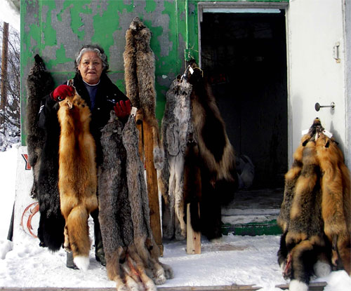 Responsible trapping has sustained our people for many generations. Elder Peggy Kormendy shows a selection of fur, February 2008.